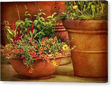 Flower Pots Canvas Print by Nikolyn McDonald