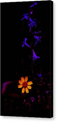 Flower Power Canvas Print by Atom Crawford