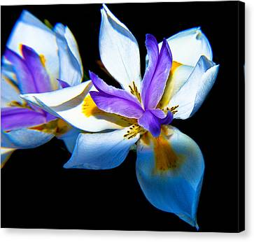 Canvas Print featuring the photograph Flower Power by Joseph Hollingsworth