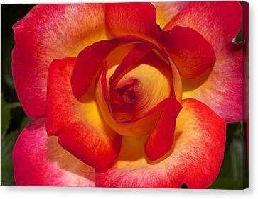 Flower Power Canvas Print by Phyllis Denton