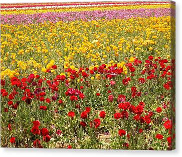 Canvas Print featuring the photograph Flower Rainbow by Nathan Rupert