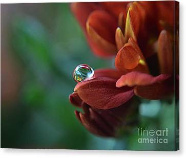 Flower Reflection Canvas Print