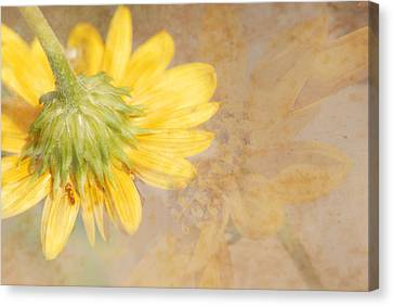 Flower Rhythm Canvas Print