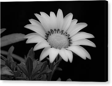 Flower  Canvas Print by Ron White
