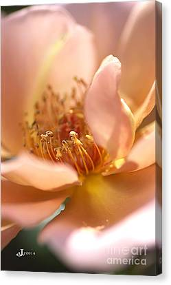 Flower-rose-soft Pink-gold Center Canvas Print by Joy Watson