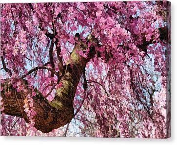 Flower - Sakura - Finally It's Spring Canvas Print