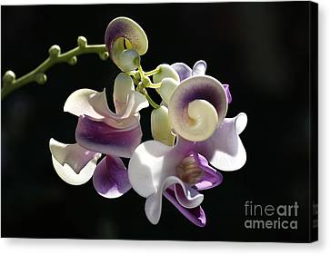Flower-snail Flower Canvas Print