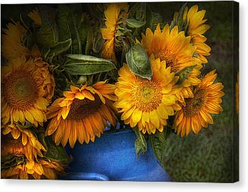 Flower - Sunflower - The Suns Have Risen  Canvas Print by Mike Savad