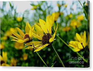 Flower - Sunning Sunflowers - Luther Fine Art Canvas Print by Luther Fine Art