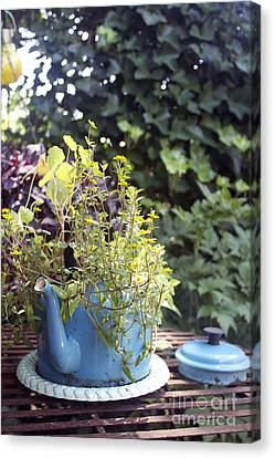 Canvas Print featuring the photograph Flower Teapot by Sebastian Mathews Szewczyk