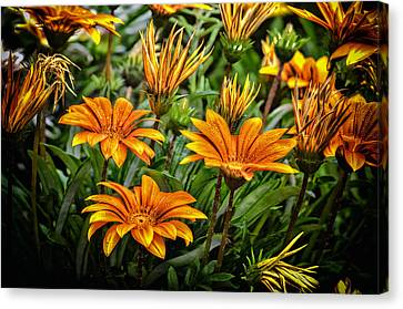 Flower Town Canvas Print by John Swartz