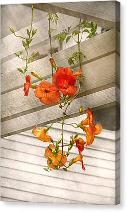 Flower - Trumpet Melodies Canvas Print by Mike Savad