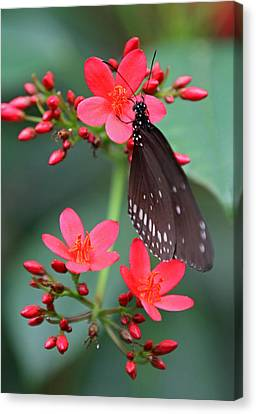 Florida Flowers Canvas Print - Flower With Butterfly by Juergen Roth