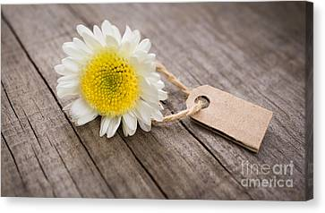 Flower With Sales Tag Canvas Print by Aged Pixel