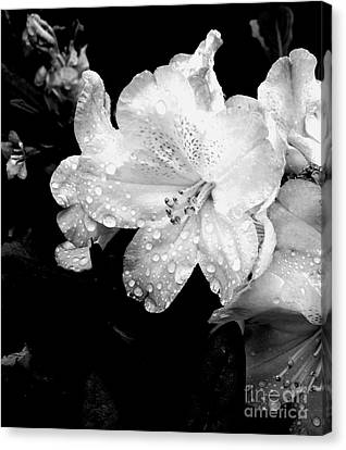 Flower With Water Drops Canvas Print by Rose Wang