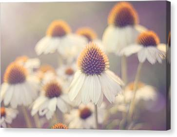 Coneflower Canvas Print - Flowerchild by Amy Tyler