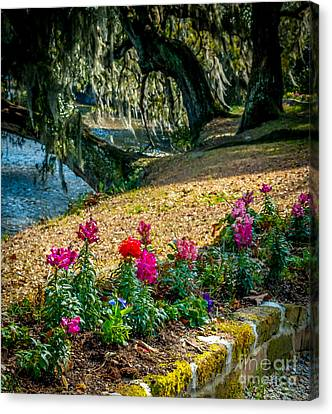 Flowered Pathway Canvas Print by Optical Playground By MP Ray