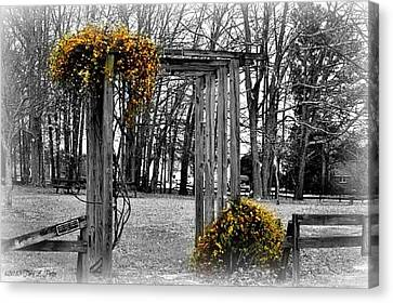 Canvas Print featuring the photograph Flowering Archway by Tara Potts
