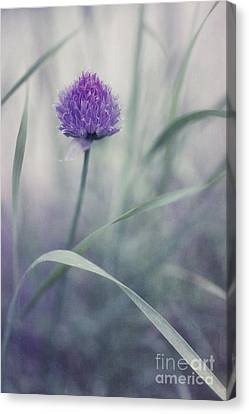 Blades Canvas Print - Flowering Chive by Priska Wettstein