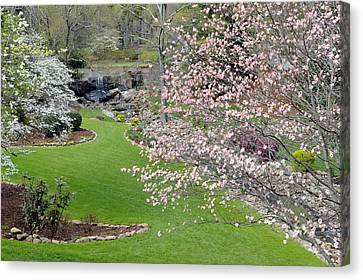 Flowering Dogwoods In Cleveland Park's Rock Quarry Falls  Canvas Print