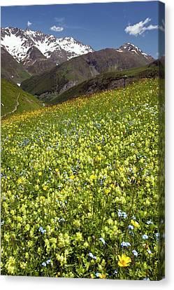 Flowering Hay Meadow Canvas Print