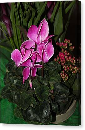 Flowering Plant Canvas Print by Cyril Maza