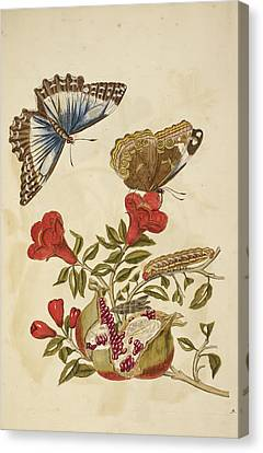 Flowering Plant With Red Flowers Canvas Print