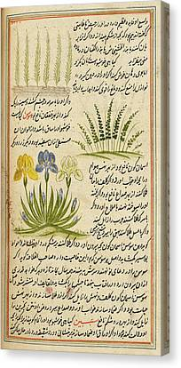 Flowering Plants Canvas Print by British Library