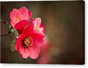 Canvas Print featuring the digital art Flowering Quince by Lana Trussell