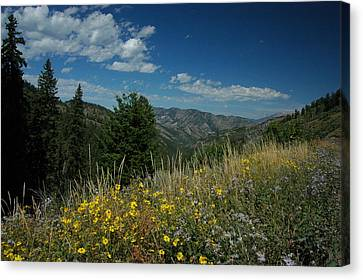 Flowering Yellowstone Canvas Print by Larry Moloney