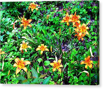 Flowers 2 Canvas Print by Dietrich ralph  Katz