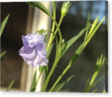 Bamboo House Canvas Print - Flowers 3 by Jonathon Hernandez