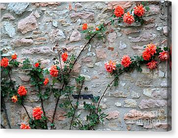 Canvas Print featuring the photograph Flowers 5-assisi by Theresa Ramos-DuVon