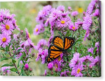 Flowers And Butterfly  Canvas Print by Susan  McMenamin