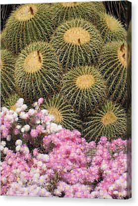 Flowers And Cacti Canvas Print