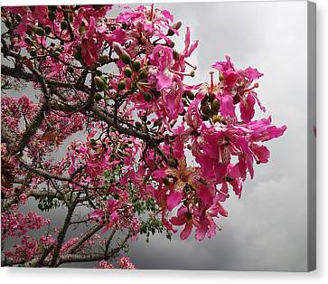 Flowers And Thorns And The Sky Adorned  Canvas Print by Kenneth James