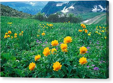 Flowers Canvas Print by Anonymous