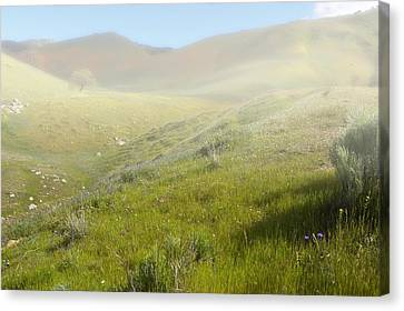 Flowers Coming Out Of The Fog Canvas Print
