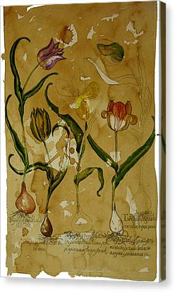 Flowers In Herbarium Canvas Print by Arual Jay