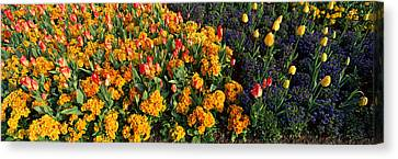 Flowers In Hyde Park, City Canvas Print by Panoramic Images
