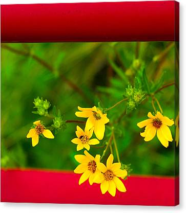 Flowers In Red Fence Canvas Print by Darryl Dalton