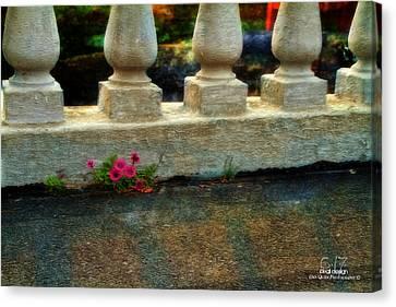 Flowers In The Cracks Canvas Print by Dan Quam