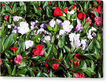 Flowers In The Garden At Villa Canvas Print by Panoramic Images