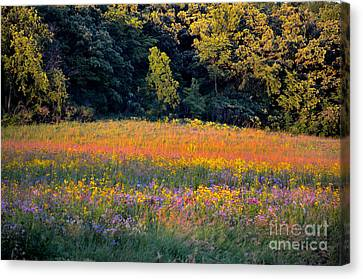 Flowers In The Meadow Canvas Print by Deb Halloran