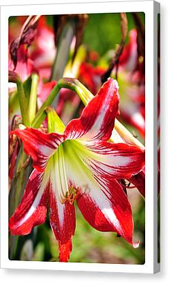 Canvas Print featuring the photograph Flowers In The Summer by Davina Washington
