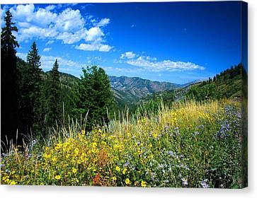 Flowers In Yellowstone Canvas Print by Larry Moloney