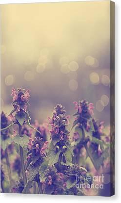 Flowers Canvas Print by Jelena Jovanovic