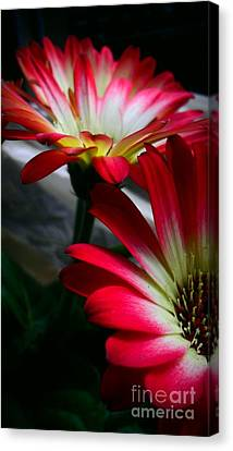 Flowers Just For Mr. Toes Canvas Print