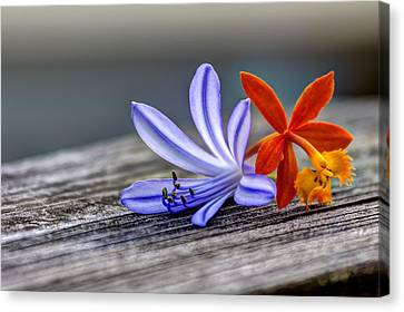 Flowers Of Blue And Orange Canvas Print by Marvin Spates