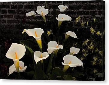 Flowers Of Ireland  Canvas Print